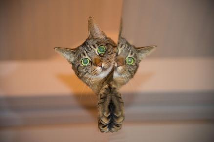 cat-697113_1280