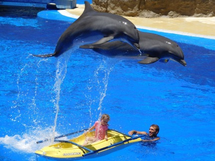 dolphins-1170342_1280