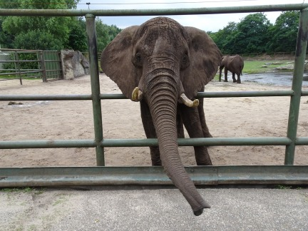 elephant-1104900_1280