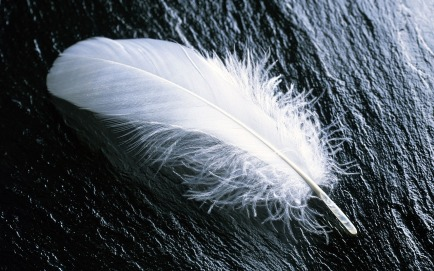 feather-967367_1280.jpg
