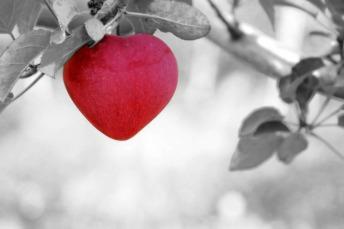 apple-570965_1280.jpg